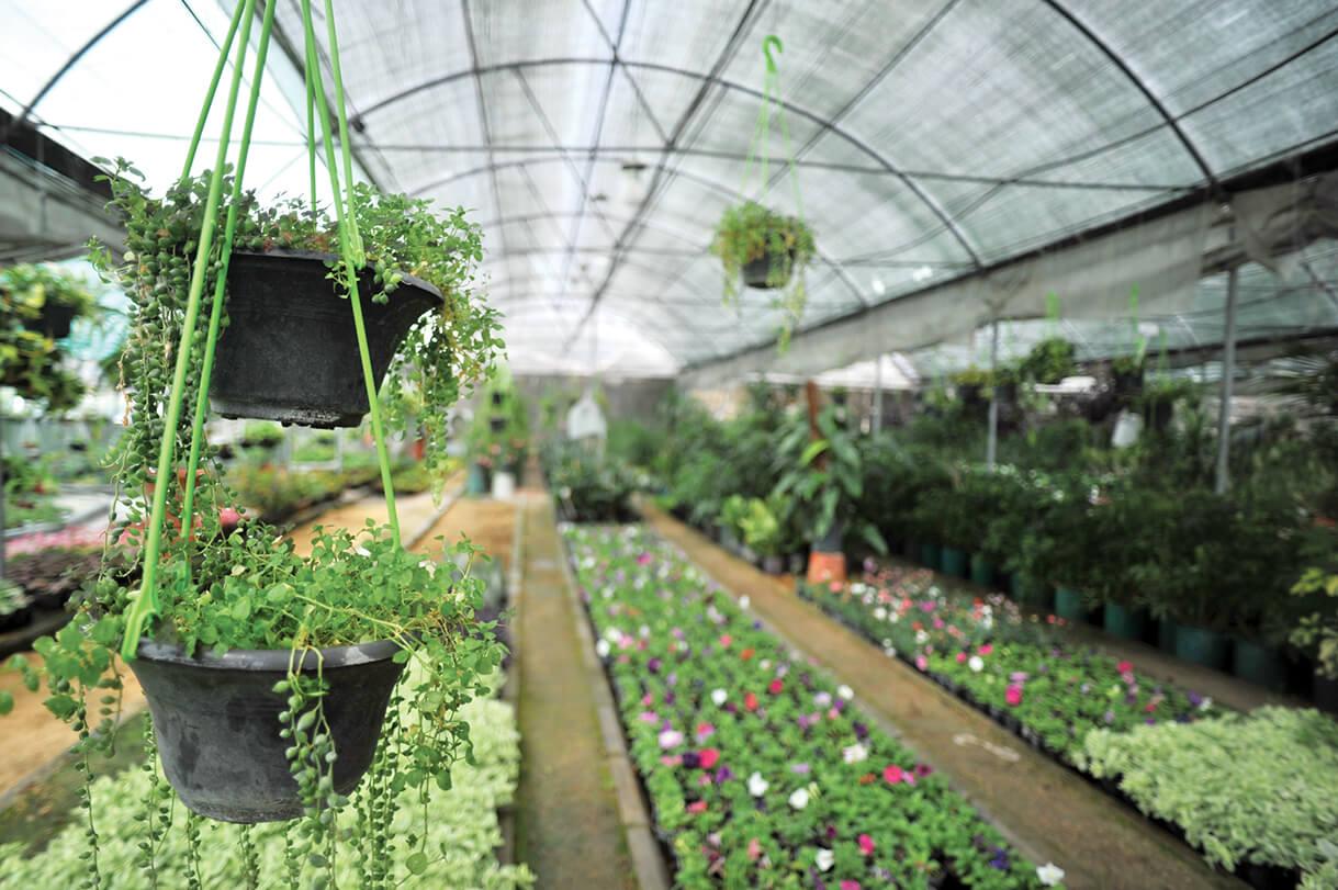 فروش آنلاین گلدان پلاستیکی گلخانه