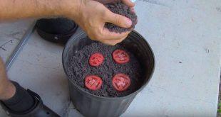 تولید و فروش گلدان سطل 4
